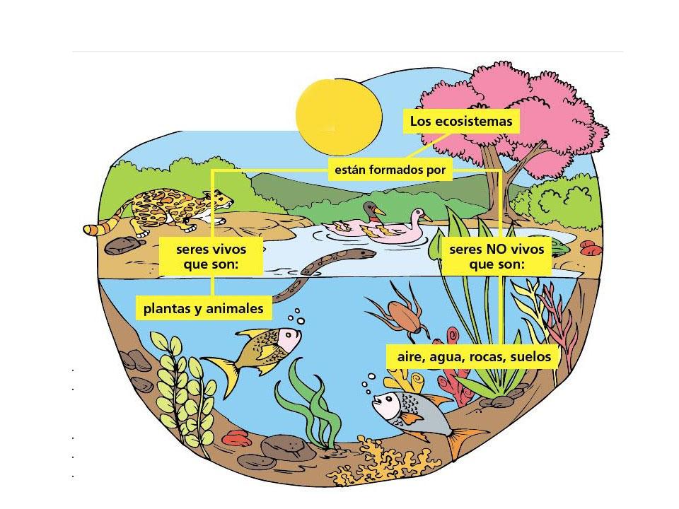 Los-ecosistemas